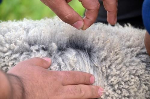 Чистая овечья шерсть
